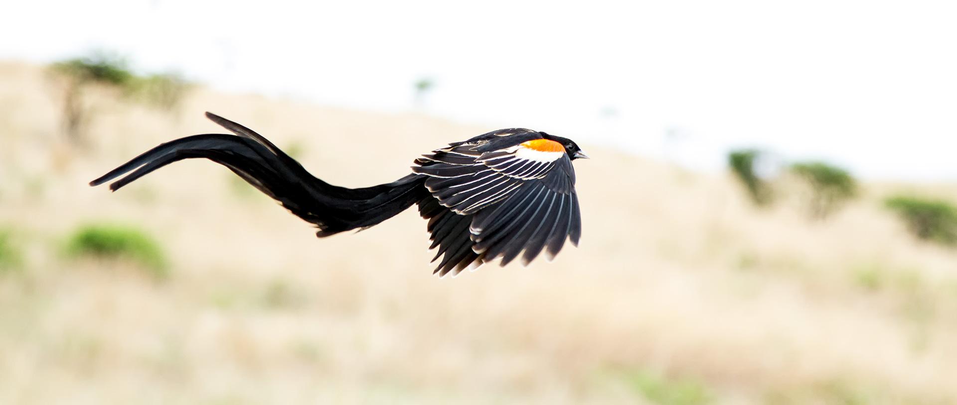 aboutbird